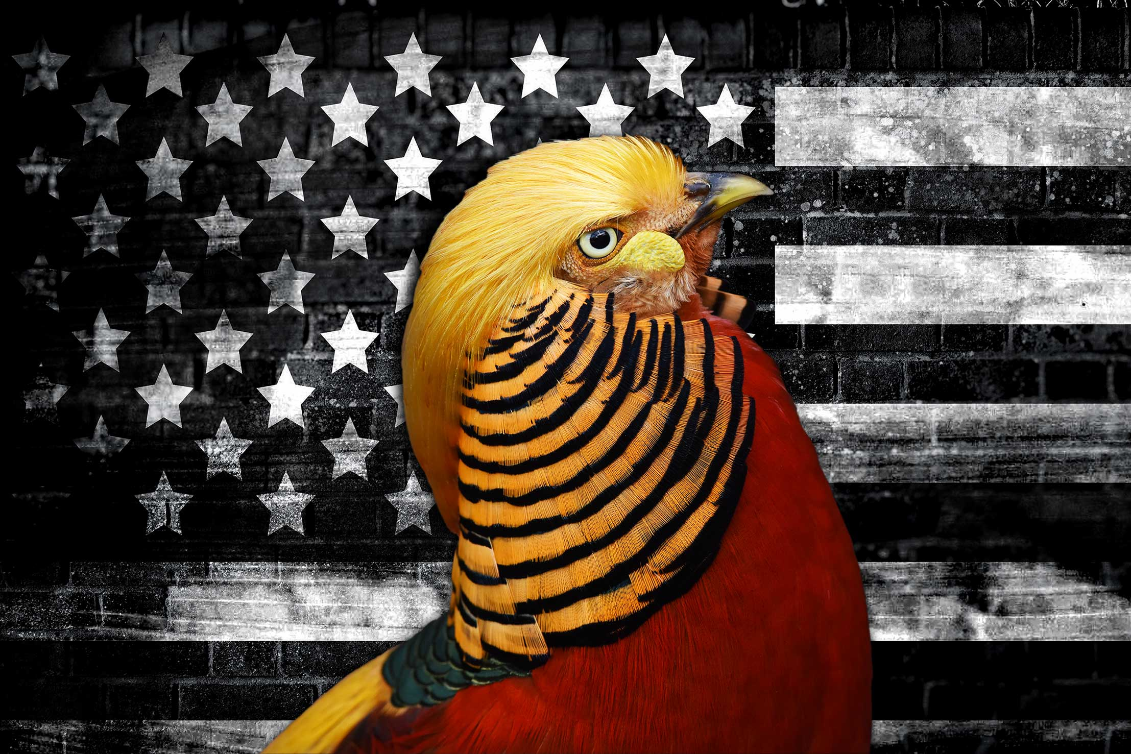 Donald Trump President of The United States as a Rooster