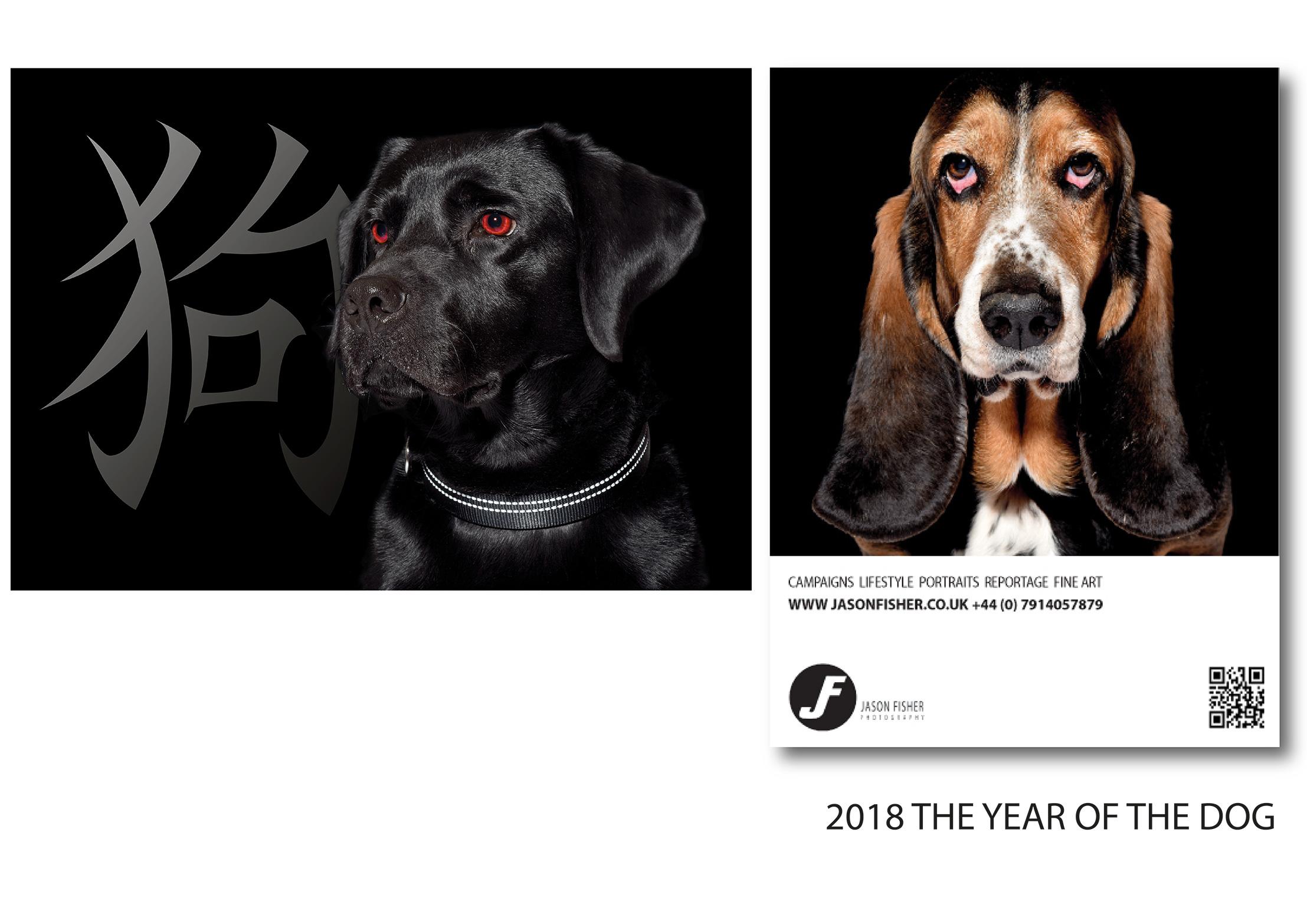 Bassett Hound Dog Black Labrador